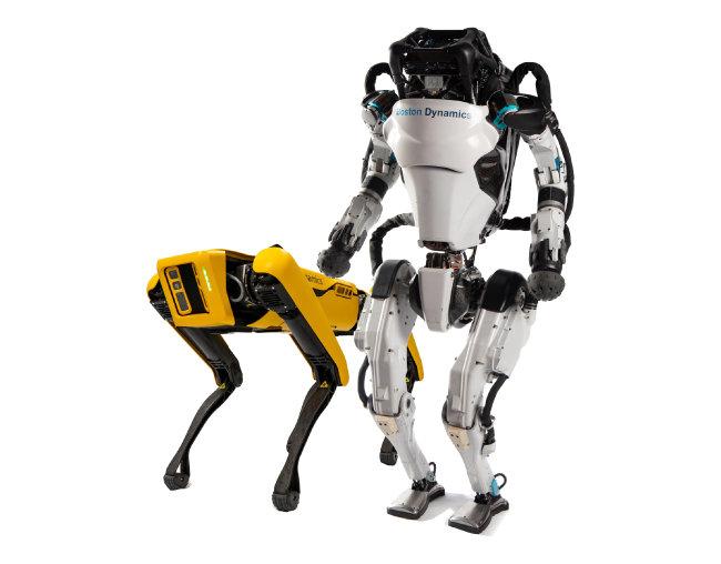 보스턴 다이내믹스의 첨단 기술력이  적용된 로봇 아틀라스(오른쪽)와 스폿.   [현대차 제공]