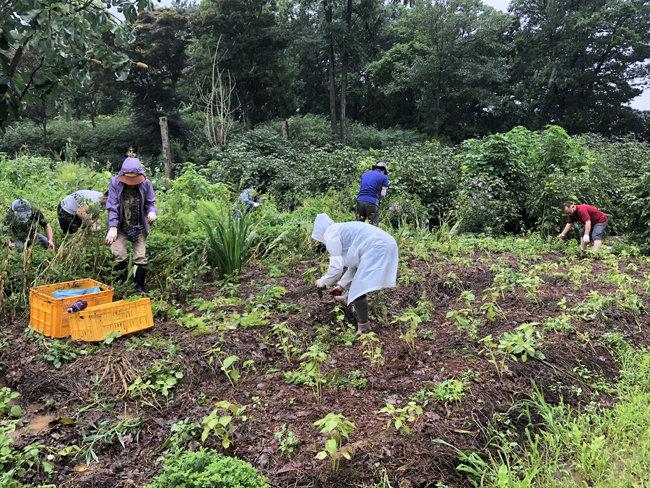 지난해 8월 4일 경기 파주시 적성면 한 농장에서 귀농 교육 프로그램 참가자들이 체험 활동을 하고 있다. [귀농귀촌종합센터·지역아카데미 제공]