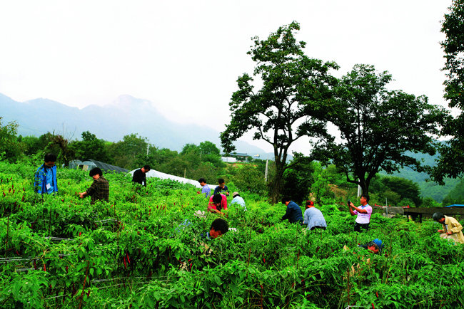예비 귀농귀촌인들이 충북 단양에서 농사 체험을 하고 있다. [단양군 제공]