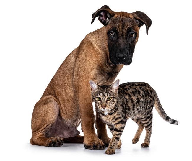 개와 고양이는  오랜 기간 사람과  함께 살아온 동물이다. [GettyImage]