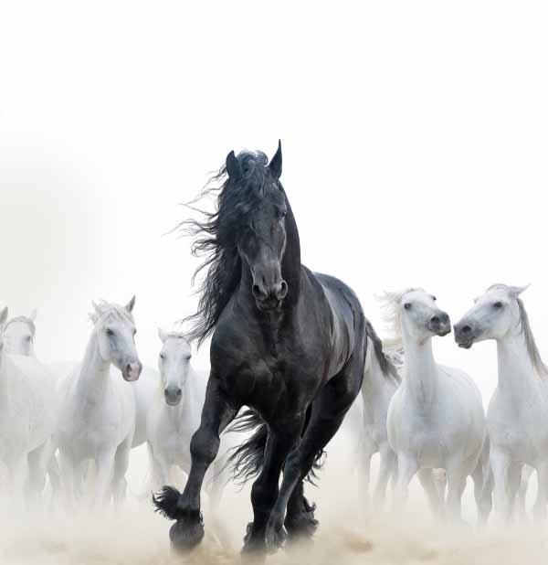 말의 수명은 보통 25~30년 남짓이다. [GettyImage]