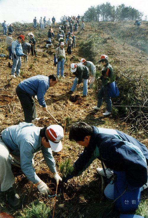 1993년 4월 5일 당시 농림수산부 공무원들이 경기 용인시 일대 야산에서 잣나무 묘목을 심고 있다. [동아DB]