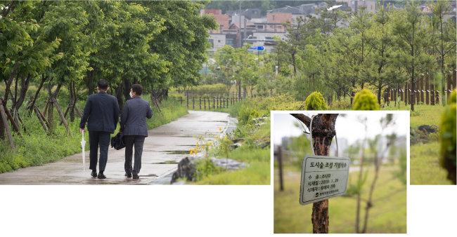 5월 28일 평택시민들이 통복천 녹지를 산책하고 있다(왼쪽). 시민과 단체가 기증한 나무가 녹지 곳곳에 자라고 있다. [지호영 기자]