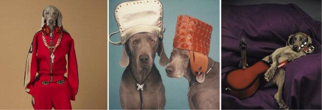 (왼쪽부터)키(Qey, 2017). 모자와 목걸이를 한 개(Head Wear, Neck Wear, 2000). 슬로우 기타(Slow Guitar, 1987). [ⓒ William Wegman]