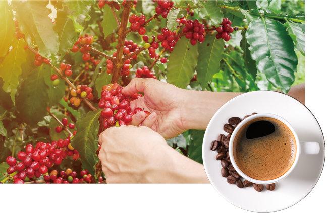 스페셜티 커피는 산지에서부터 한 잔의 커피가 되기까지 꼼꼼한 품질관리를 거친 원두를 사용한다. 추출도 원두의 개성을 최대한 돋보이게 하는 방식으로 이루어진다. [GettyImage]
