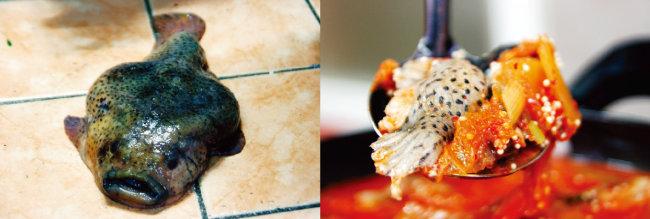 심퉁스럽게 생긴 도치(왼쪽), 알 밴 도치와 김치를 넣어 끓인 탕.