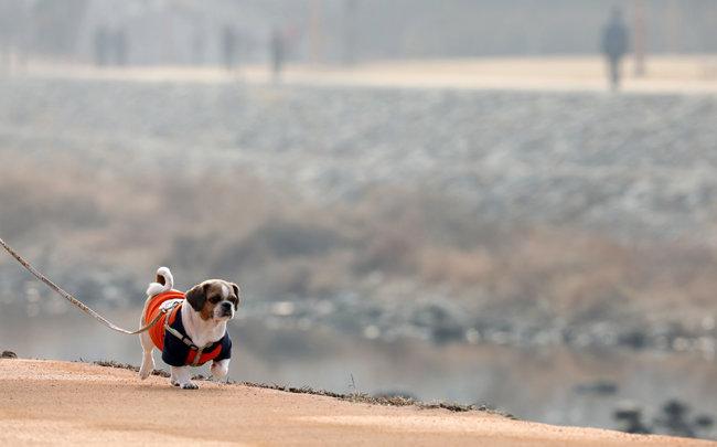 미세먼지가 심한 날에는 반려동물과 산책 후 워터리스 샴푸와 물티슈로 닦아주는 것이 좋다. [뉴스1]