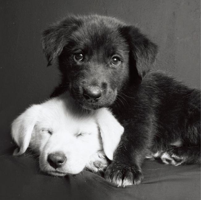 하얀 반려동물과 검은 반려동물이 함께 있다면 되도록 검은 반려동물에 노출을 맞추자.