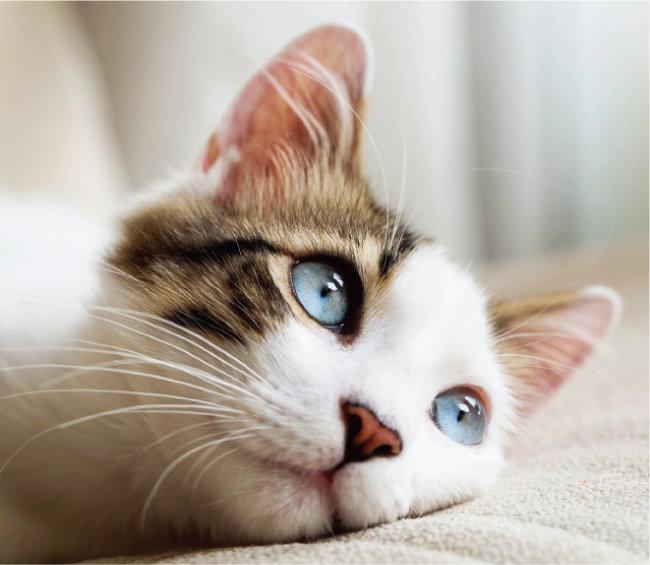 반려동물의 신비로운 눈동자 위주로 사진을 남겨보자.