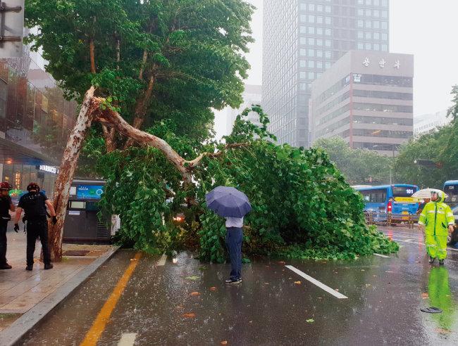 9월 3일 갑자기 내린 폭우로 서울 종로구 종로구청 사거리 인근 가로수가 부러졌다. [동아DB]