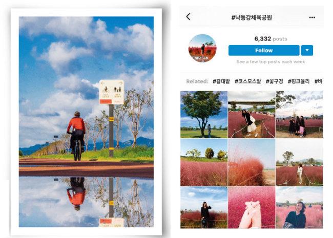 낙동강체육공원의 산책로와 자전거길, 낙동강체육공원의 핑크뮬리 사진을 올린 인스타그램(왼쪽부터). [사진 제공 · 구미시청, 인스타그램 캡처]