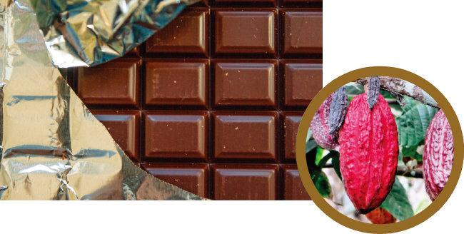 판 형태의 초콜릿. (왼쪽) 카카오 열매. [사진 제공·김민경]