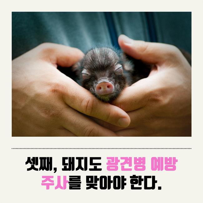 반려 돼지 키우기 꿀팁 8
