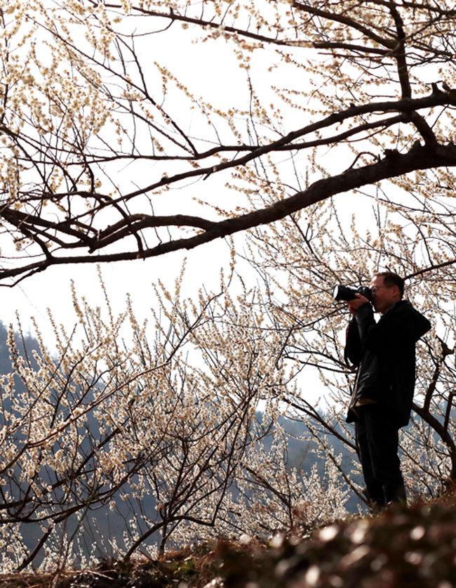매화꽃 풍경을 카메라에 담는 봄 꽃놀이 관광객
