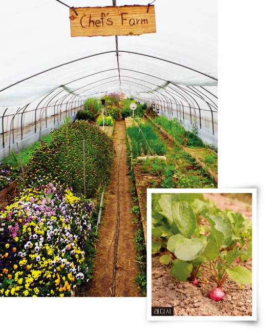 요리사들의 작물이 자라고 있는 셰프스 팜. 꽃밭인가 싶을 정도로 다양하고 풍성한 먹을 수 있는 꽃들이 만발해 있다. [사진 제공·김민경]
