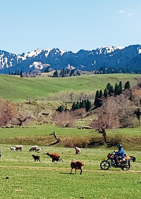 중국의 6대 아름다운 초원 가운데 하나인 나라티 초원. 일대일로의 혜택으로 부유해진 덕에 이제 목동도 오토바이를 타고 양과 소, 말 떼를 몬다. [하종대 기자]