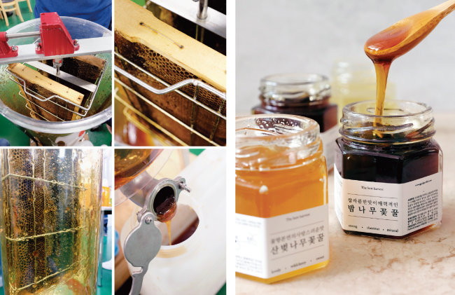채밀기에 소비(벌집)를 넣어 꿀을 받는다. 사진은 일반인 체험용인 작은 채밀기. [사진 제공·김민경]