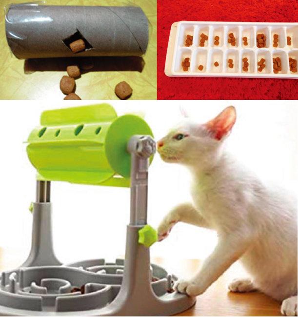 다양한 종류의 푸드퍼즐은 고양이가 즐겁게 식사하도록 돕는다. [사진 제공 · 이영수]