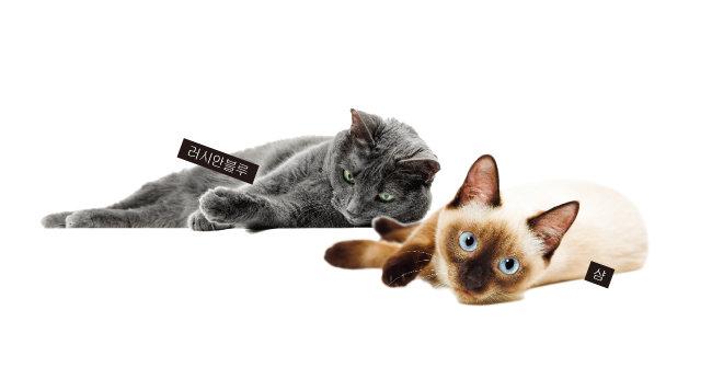 고양이 품종별 다른 질환