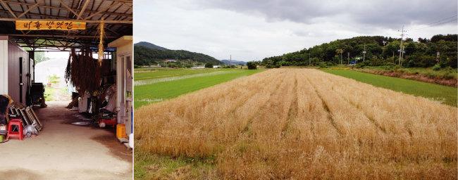 황진웅 농부의 수확을 앞둔 앉은뱅이밀밭 (오른쪽)과 버들방앗간. [사진 제공·김민경]