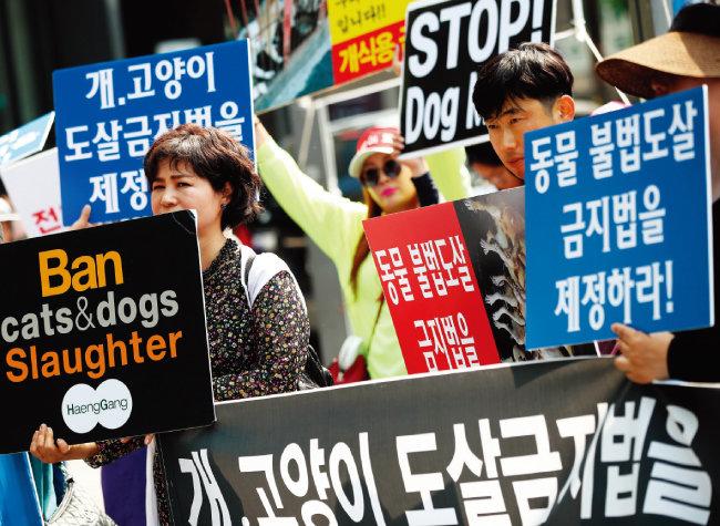6월 서울 종로구 인사동에서 동물보호단체들이 개 식용 금지법을 제정하라는 시위를 하고 있다. [뉴스1]