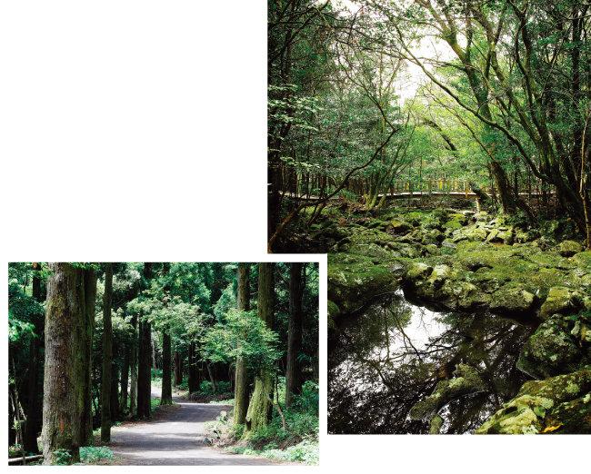 서귀포 '치유의 숲'은 10개 치유숲 길이 이어져 있어 1~3시간가량 거닐며 명상하기에 좋다. [사진 제공 · 제주특별자치도관광협회]