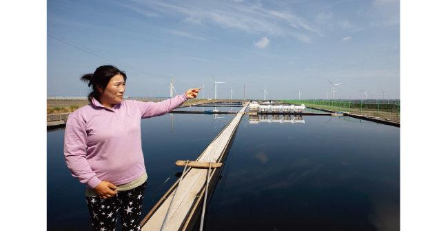 7월 2일 천일염 생산자 제갈순희 씨가 염전 옆에 들어선 태양광발전소를 가리키고 있다. [지호영 기자]