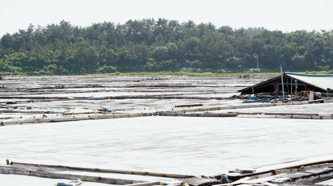 7월 2일 태양광발전 업체에 매각된 전남 신안군 지도읍 태천리의 옛 염전 모습. [지호영 기자]