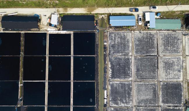 7월 2일 전남 신안군 지도읍 태천리 상공에서 바라본 염전(왼쪽)의 모습. 태양광발전 업체에 매각된 폐전(오른쪽)과 확연한 차이를 보인다. [지호영 기자]
