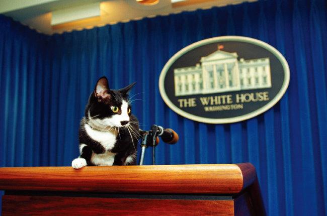 빌 클린턴 전 미국 대통령 시절의 '퍼스트 캣' 삭스. [클린턴 대통령 도서관]