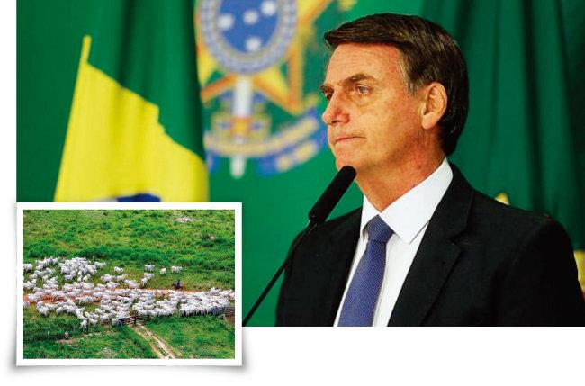 아마존 개발을  적극 주장해온 자이르 보우소나루 브라질 대통령(위)과 브라질 농부들이 아마존 열대우림을 개간한 목초지에서 소들을 키우고 있는 모습. [Folhapress, Folhapress]