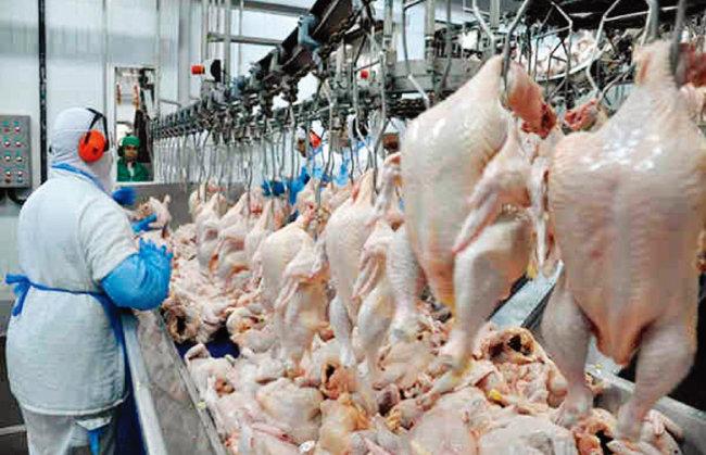 브라질 닭가공 공장의 한 직원이 중국으로 수출할 닭고기들을 손질하고 있다. [브라질 모니터]