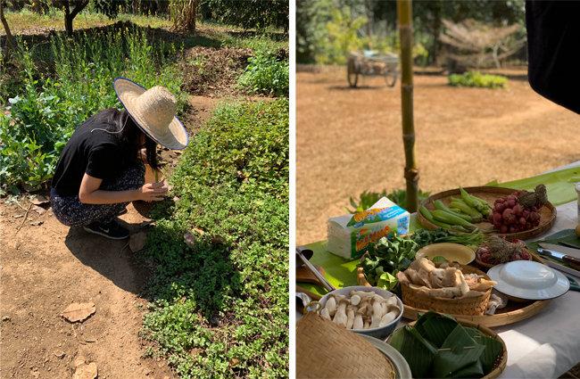 치앙마이 한 농장에서 열린 쿠킹 클래스에 참가해 밭에서 식재료를 수확하는 주은진 씨(왼쪽)와 이 농장의 신선한 식재료들. [사진 제공·주은진]