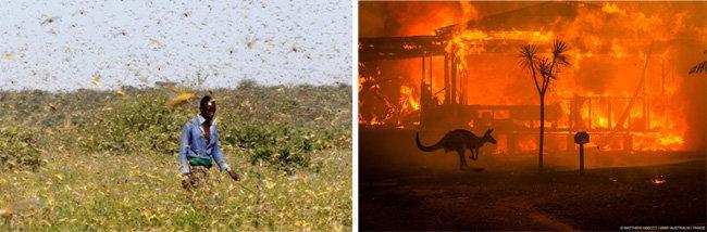 케냐 하늘을 덮은 사막메뚜기떼(왼쪽). 호주산불. [KTN News Kenya 공식유튜브 캡쳐, 세계자연기급(WWF) 호주지부]