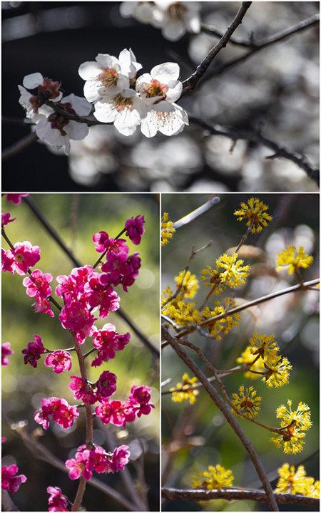 만개한 봄꽃들.