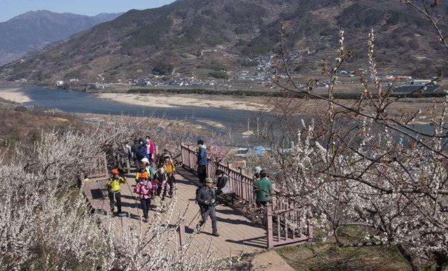 매화마을 데크에서 바라 본 섬진강.