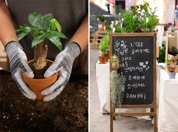 식물을 사고 화분을 선택하면 즉석에서 전문가가 심어준다.  [지호영 기자]