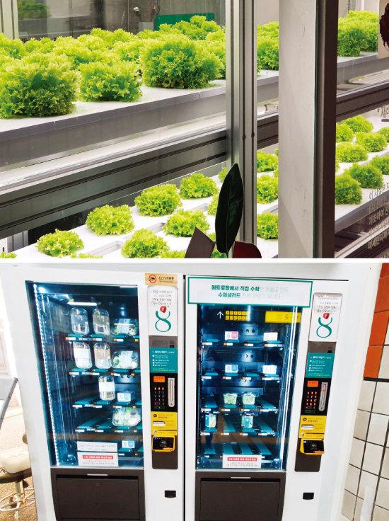 서울지하철 을지로3가역 '메트로팜'에서 자라고 있는 채소(위)와 샐러드 자판기. [오홍석 기자]