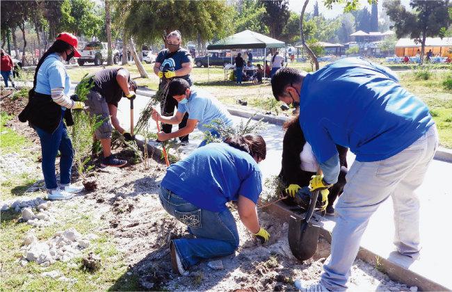 멕시코 티후아나의 ASEZ WAO 회원들이 모렐로스공원에서 나무 심기를 진행했다. 올해만도 네 번째 활동으로, 총 800그루 이상의 나무가 식재됐다.