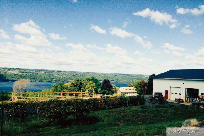 미국 뉴욕 주 북부에 위치한 핑거 레이크스. 아름다운 풍광을 자랑하는 이곳은 신선한 포도 산지로 유명한 지역이다.