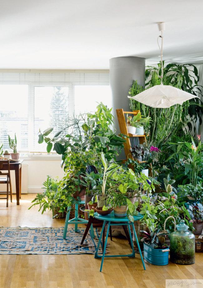 반려식물로 우리 집 리모델링