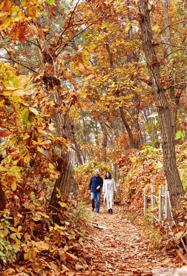 낙엽이 포근하게 쌓인 구봉도.