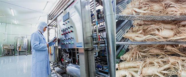 인삼 씨앗에서 최고의 효능을 지닌 삼농인발효홍삼이 탄생하기까지는 2천5백55일이 걸린다.