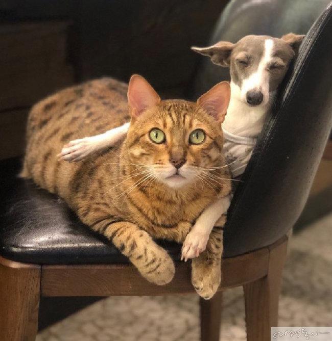 설채현 원장이 기르는 고양이 지코와 강아지 세상이.