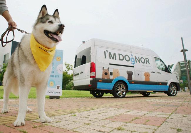 현대차는 반려견 헌혈 문화 조성을 위해 찾아가는 반려견 헌혈카 캠페인 '아임도그너(I'M DOgNOR)'를 진행한다.