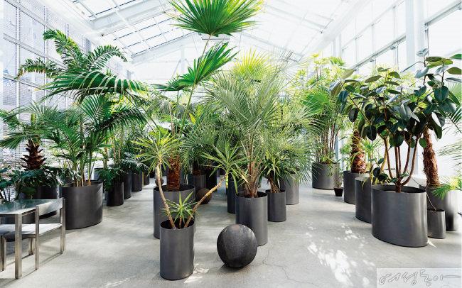 식물관PH에는 '식물의 집'이라는 이름처럼 1백여 종이 넘는 식물이 가득하다.