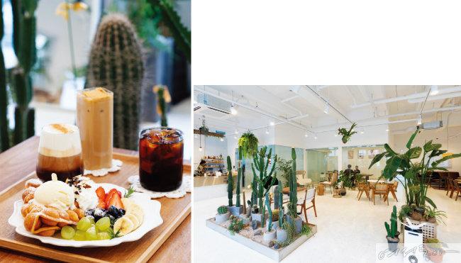 로봇 바리스타가 만든 커피음료와 생과일홍콩에그와플(왼쪽). 다양한 식물이 가득한 플랜테리어 카페로도 유명하다.