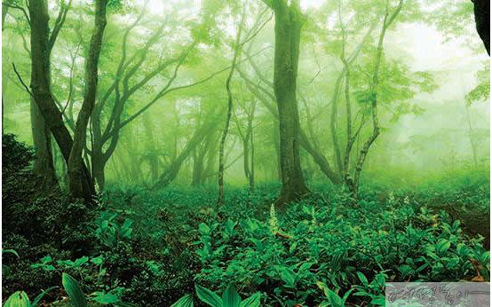 사려니숲길. [제주관광공사 제공]