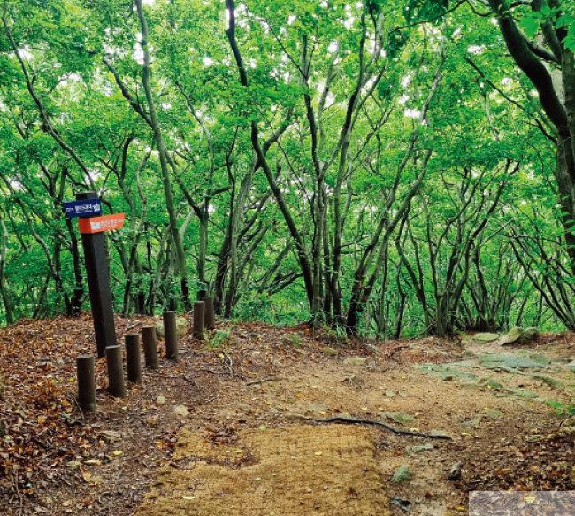 삼림욕을 즐기며 힐링할 수 있는 둘레길.