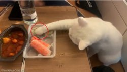"""""""아!만두"""" 집사 뽀뽀보다 간식이 더 중요한 고양이"""